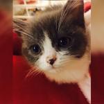 養一隻貓咪,你離這個夢想還有多遠?