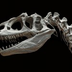 拒絕恐龍化石拍賣收藏行為
