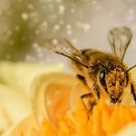 蜜蜂的聰明行為