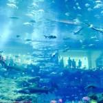 世界最大海底餐廳即將完工