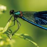 研究:全球昆蟲將銳減40% 恐為人類滅亡開端