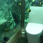 不是馬桶廣告,是真的在水族箱上廁所