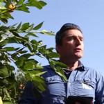 把電腦科技帶進果園 以色列首推「智能」樹木系統保護水果