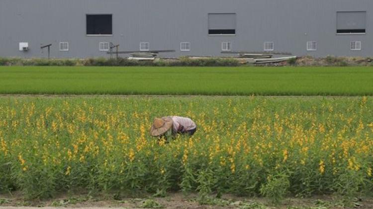【潘翰聲專欄】霸佔台灣農地的違章工廠老闆一手開心數鈔票,一手把農夫推入生存地獄