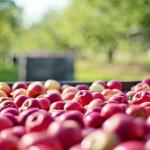 農業文化產業發展契機