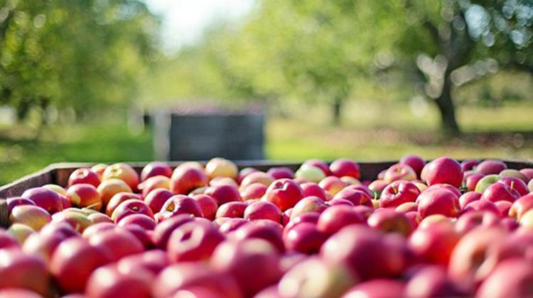 apples-1004886__340