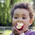 有機蘋果比一般蘋果有更多的有益菌