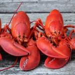 為什麼煮熟後的龍蝦會變紅?