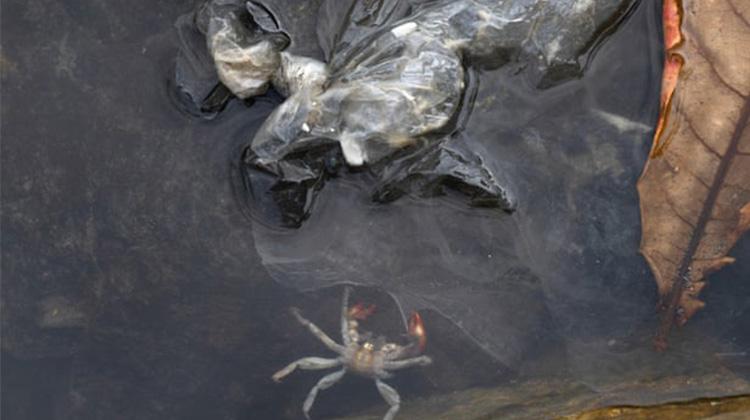受到塑料污染的物種