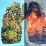 #PrayForTheAmazon 「地球之肺」火在燒 G7及全球各界領袖關注空前國際危機
