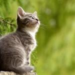 貓咪懂自己的名字