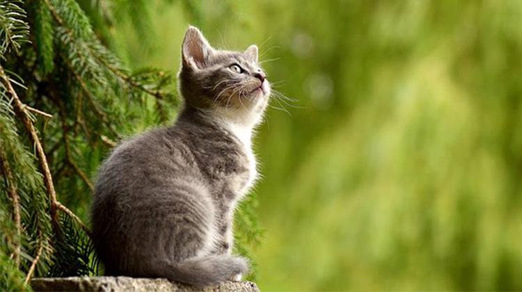 cat-2083492__340
