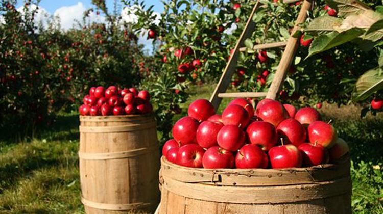 orchard-1872997__340