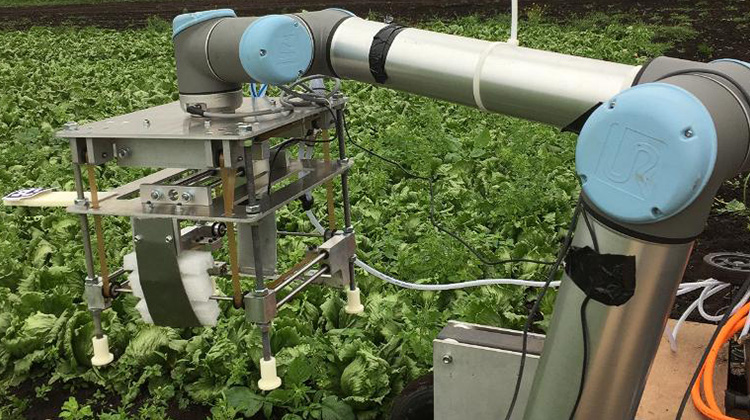 190812153152-robot-farmers-vegebot-exlarge-169