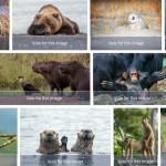 2019年搞笑野生動物攝影競賽作品