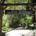 穆爾紅木森林Muir Woods、沿海小鎮Sausalito、北邊的金門大橋