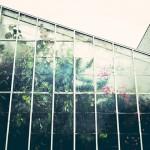 為何千禧生著迷於室內植栽?