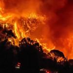森林大火後遺症
