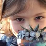美6歲男孩為澳洲大火籌款超過台幣150萬