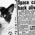 費利切特是第一隻進入太空的貓科動物,她終於得到了應得的榮譽