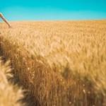 全球農業的未來發展