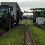 英國工程師的新工作:農場工人