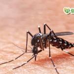 超熱!別忘了還有登革熱 防蚊做好沒煩惱