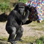 英國動物園恐無法自疫情影響中恢復