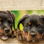史上最棒工作:看顧兩隻狗 年薪235萬元
