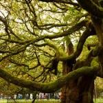 歐洲年度之樹
