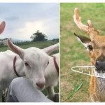 【不一樣的暑假】編輯精選全台 4 家可用「農遊券」的好去處,帶著孩子體驗:餵食小羊小鹿、親手做木工