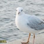 我與海鷗有個約會
