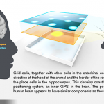 腦內GPS研究獲2014諾貝爾生醫獎