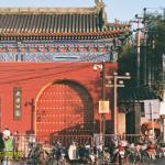 北京的黃葉
