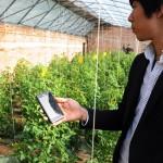 智慧農業 點點滑鼠種蔬菜