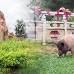 中國道教名山——魏寶山