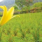 有機也能出頭天,堅持中見契機 環保型農杜司偉 籲恢復農民形象、農業亮光