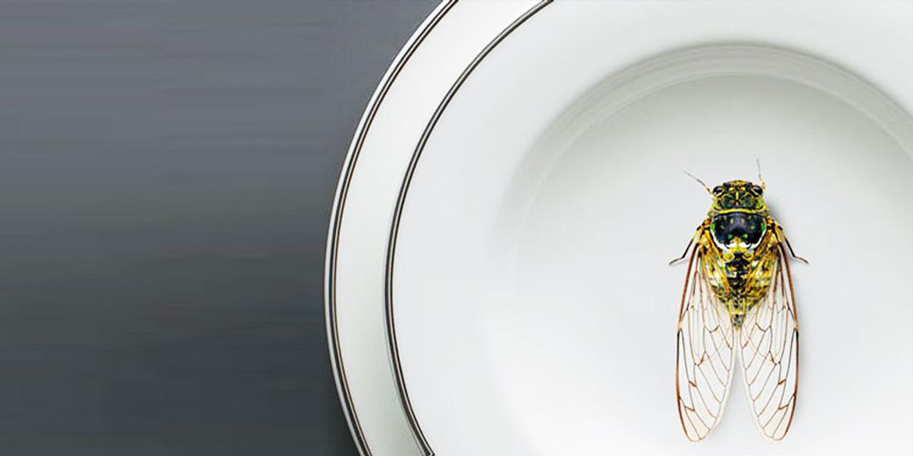 未來食物  多吃蟲,救地球!