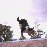 Epic Parkour Dog