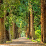 耶魯大學:種植一萬億棵樹有效