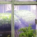 植物工廠未來潛力作物- 中草藥