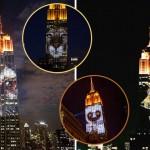 群眾關心才能拯救動物免於滅絕,紐約《Projecting Change》投影藝術