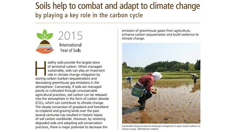 全球3成農土惡化 衝擊糧食供需