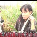 台灣好行 到北海岸採筊白筍