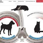 貓狗心絲蟲症初期沒症狀 寵物飼主宜注意