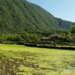 認養一畝八煙水田 護生態助老農