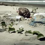 生命會找到出路?日本科學家發現「愛吃PET塑膠」的細菌