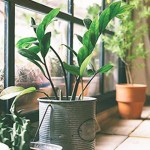 天然空氣清淨機/選對室內盆栽幫你排毒!