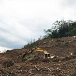 校長抨擊違法開發業者:雲林樟湖山區成「螢火蟲之墓」