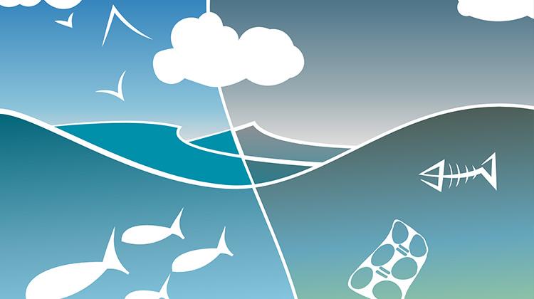 在1萬米深海的生物體內,也能發現人類污染物蹤跡